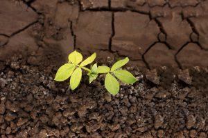 crecimiento personal-sabadell